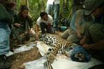 Jaguares Sin Fronteras