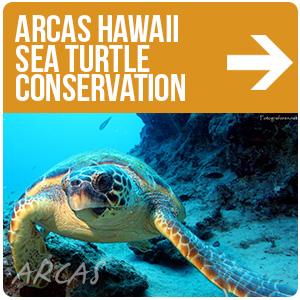 ARCAS Hawaii Conservación e Investigación de Tortugas Marinas