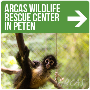 ARCAS Wildlife Rescue Center in Peten