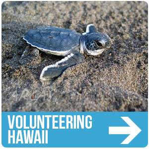ARCAS Volunteering in Hawaii